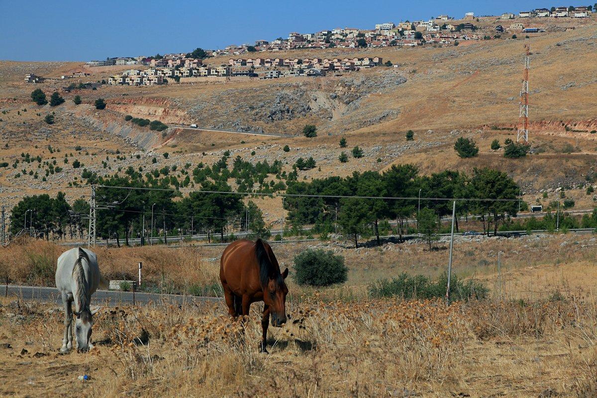 кони - evgeni vaizer