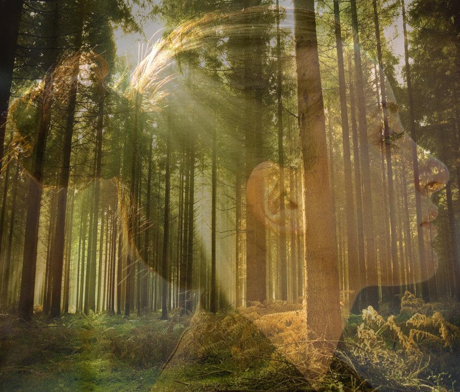 Forest - Karen Khachaturov