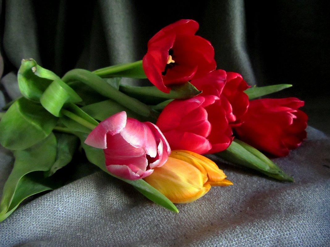 Мартовские тюльпаны - Сергей Карачин