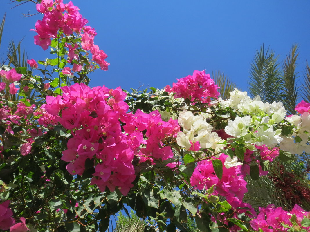 Фото египетских цветов