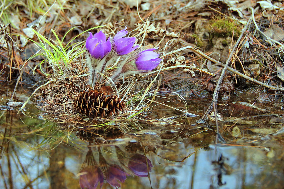 весна пришла... - Александр