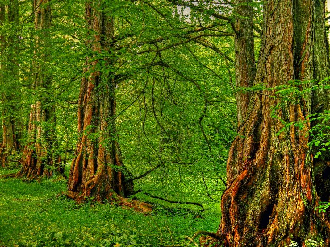 уничтожение леса в берендеевом царстве обои предпросмотром тему: