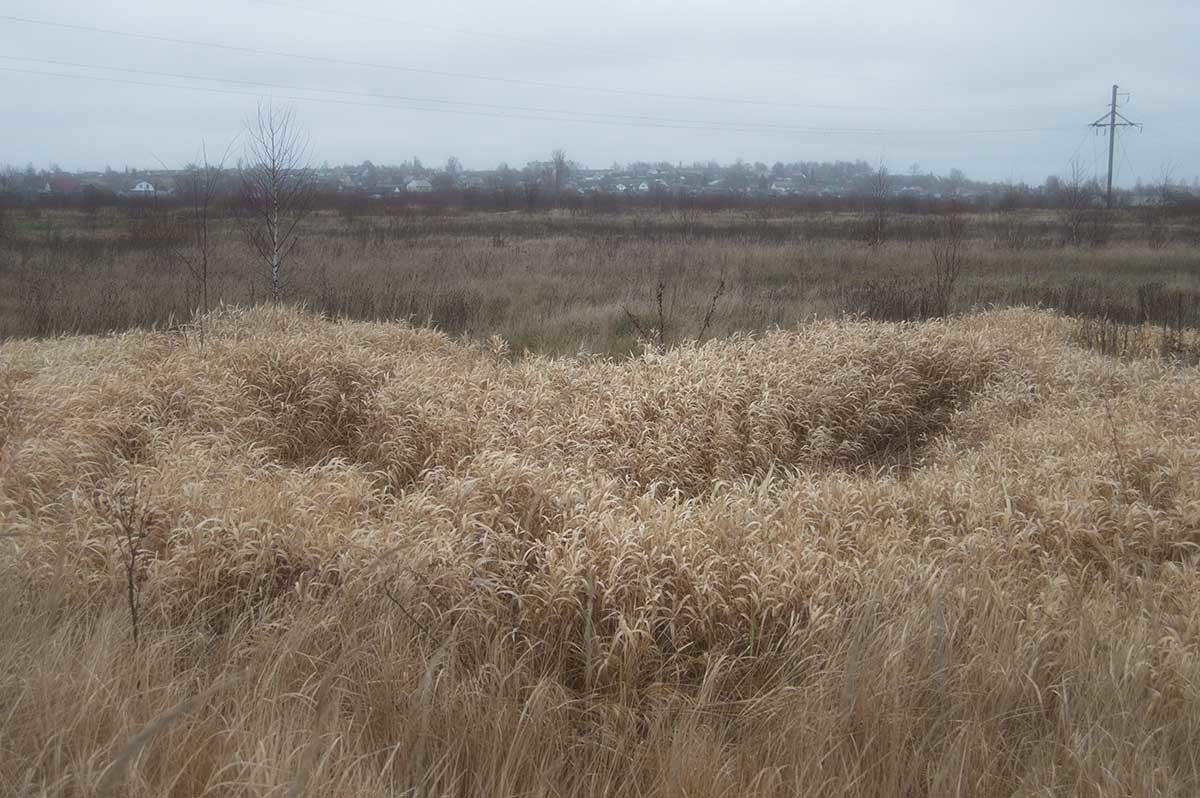 осенние травы - Владимир Безгрешнов