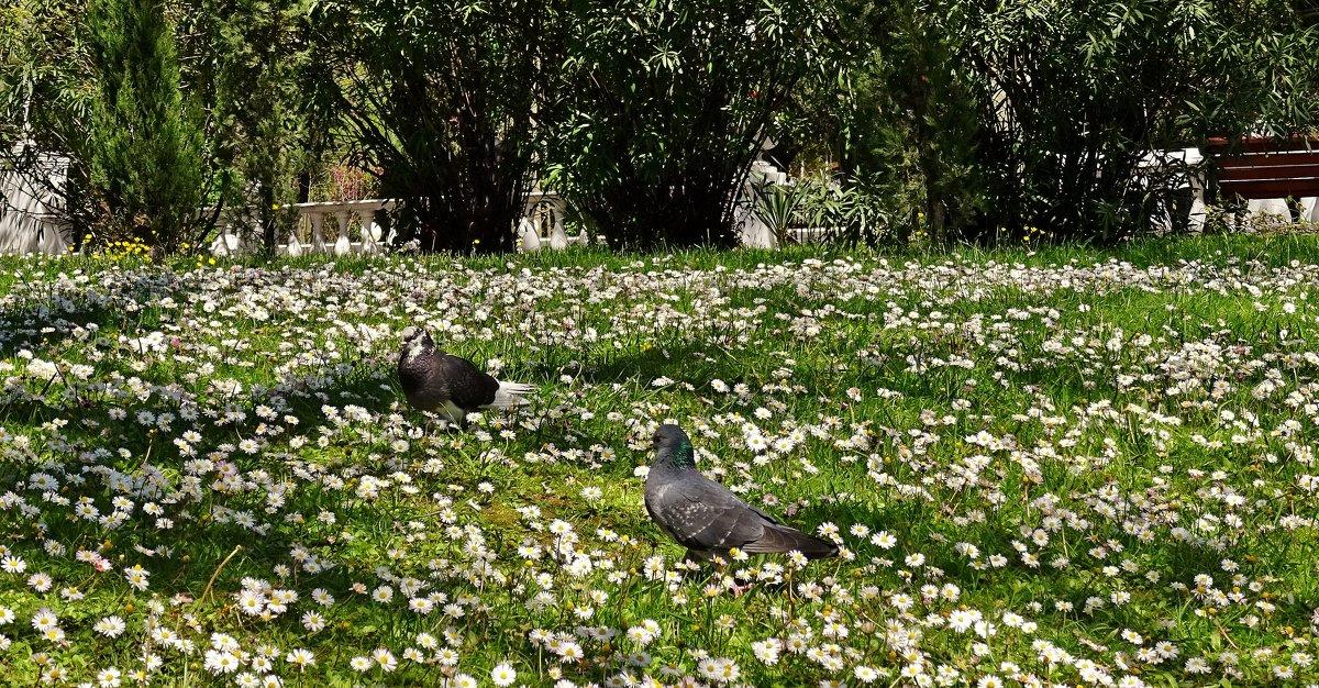 Весна..... - СветЛана D