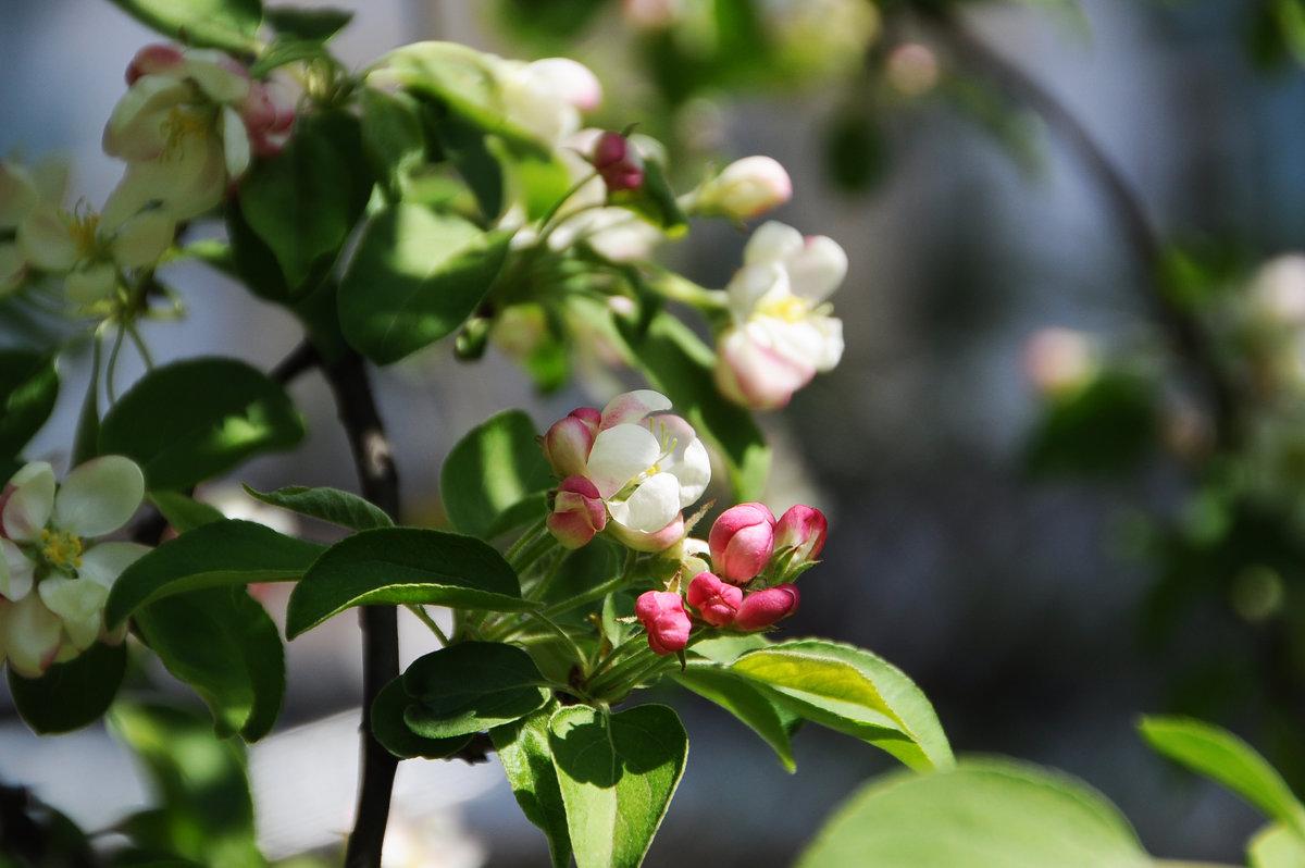 Цветение - marmorozov Морозова