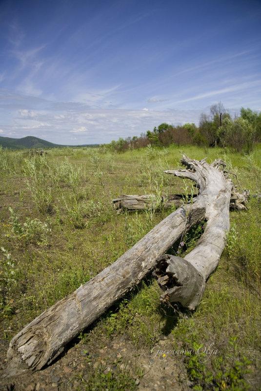 Старое дерево - Ольга Гурьянова