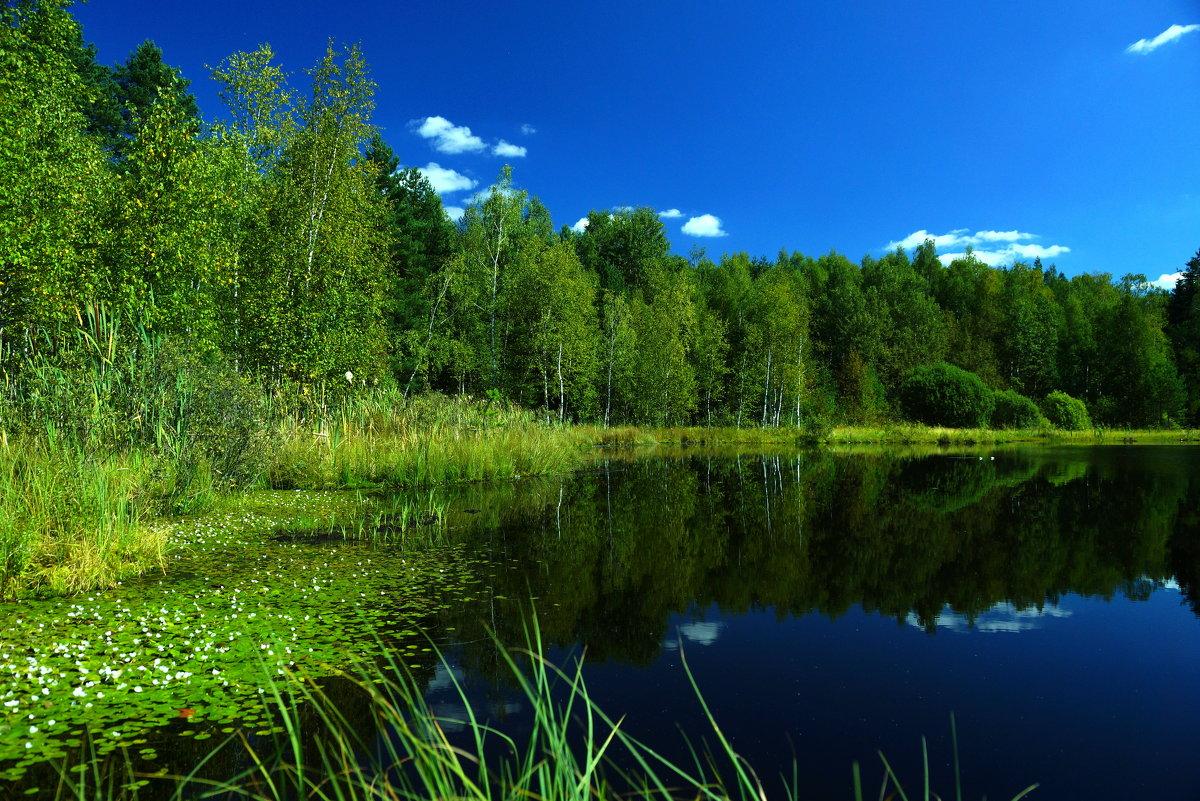 Август. Лесное озеро... - НаталиКа