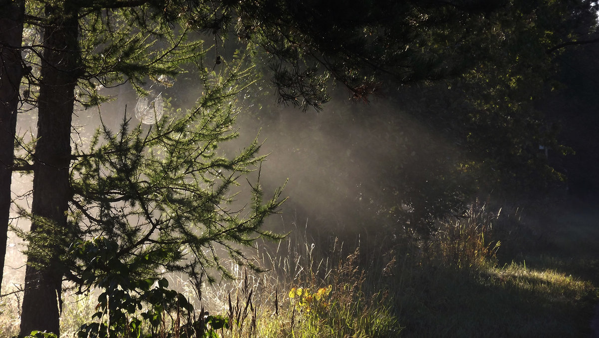 туман... - svetlana