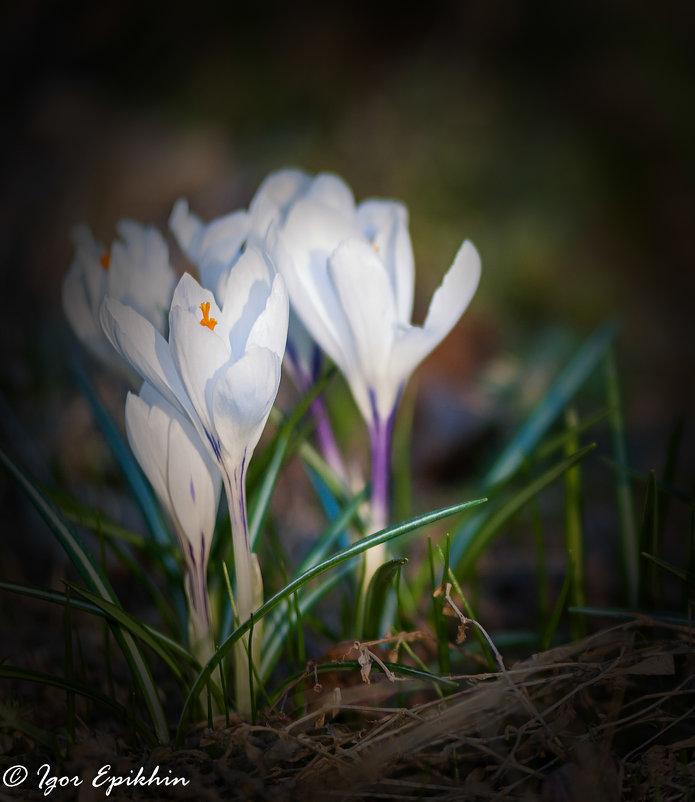 прекрасные творения природы - Igor Epikhin
