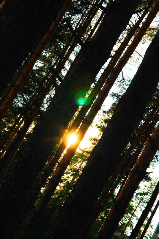 Вечер лета... Спокойствие в лесу - Druma Bassters