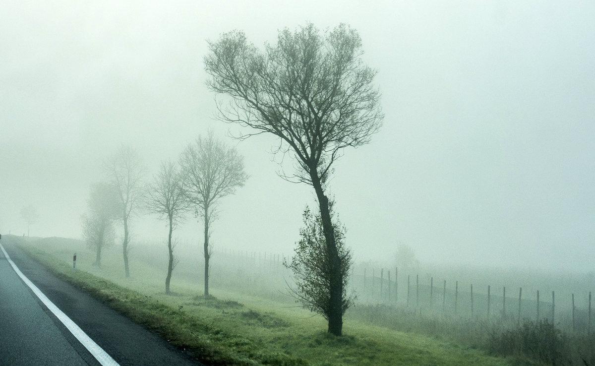 туман на дороге - Лариса Батурова