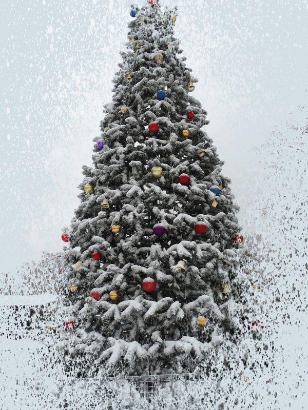 Завтра первый день зимы... - Тамара (st.tamara)
