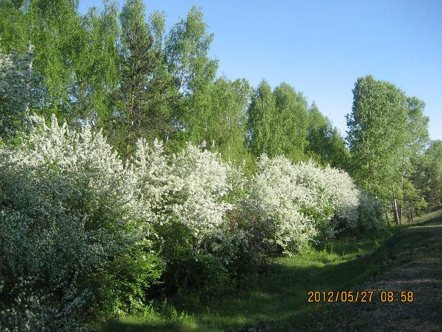 Весна - ОКСАНА ЮРЬЕВНА ШВЕЦ