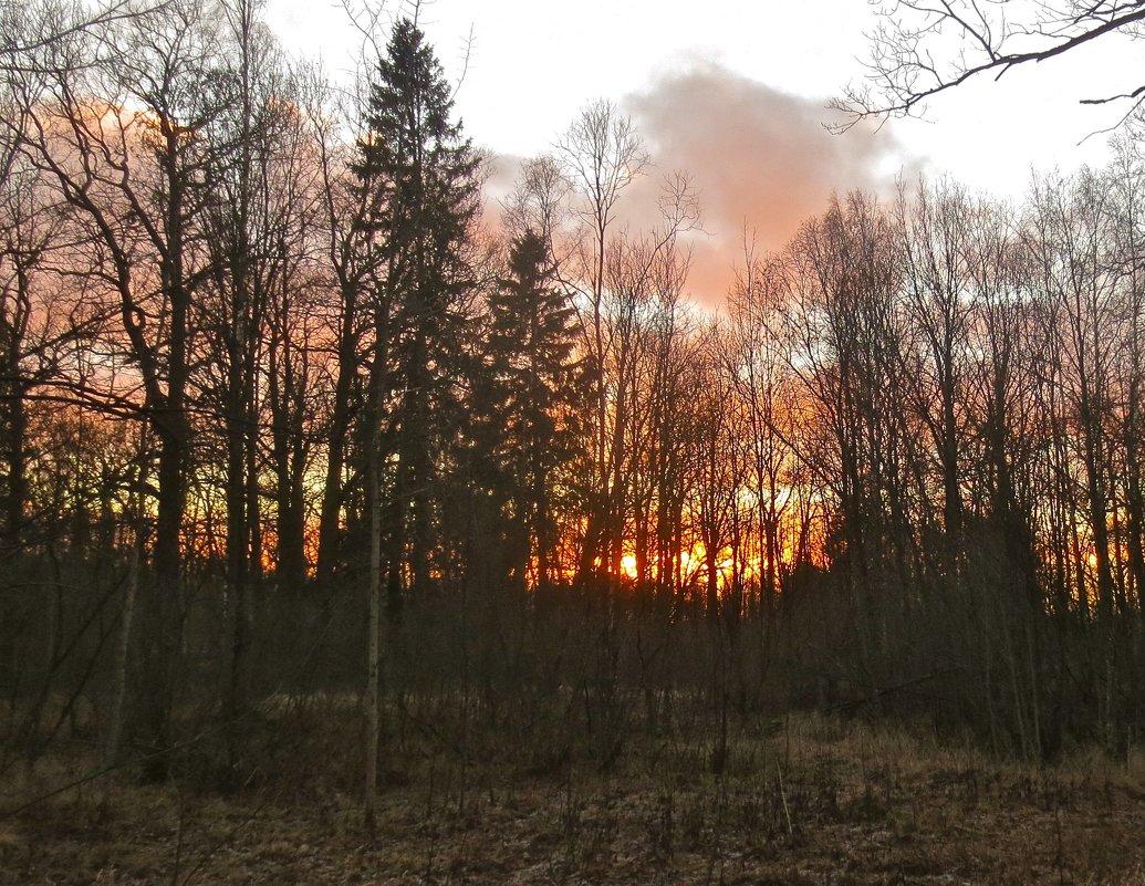 за лес уходит солнце - Елена