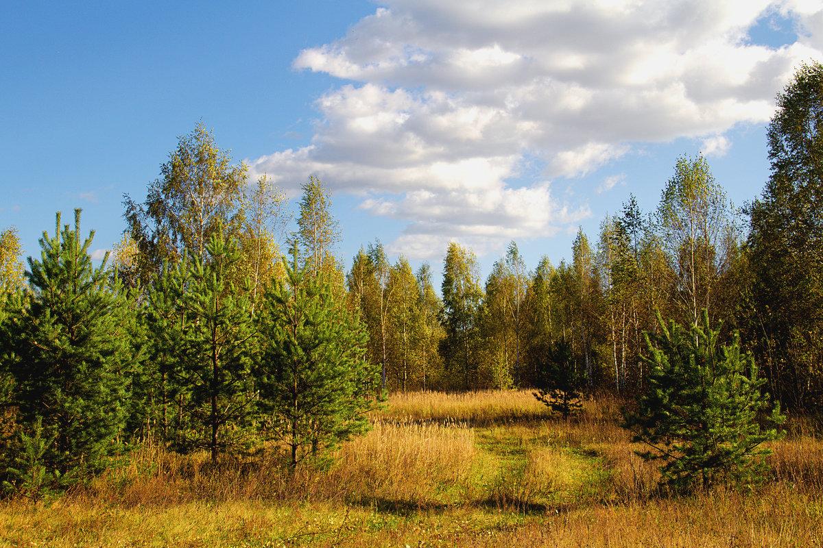 http://s2.fotokto.ru/photo/full/370/3703730.jpg