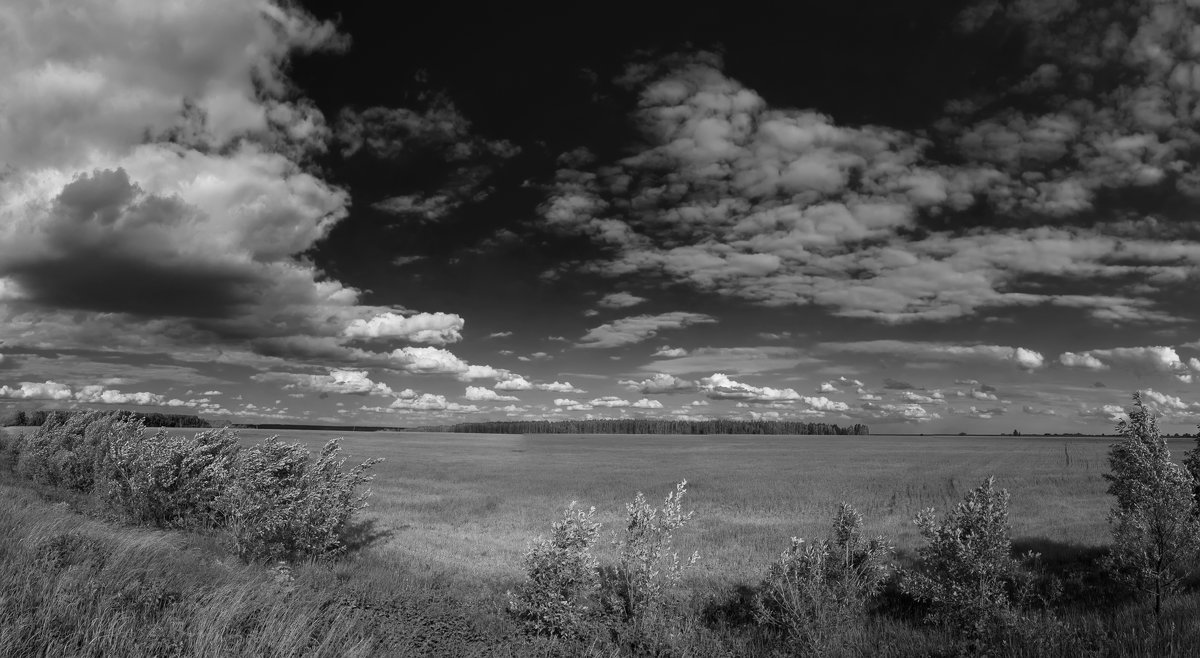 лето картинки черно белые