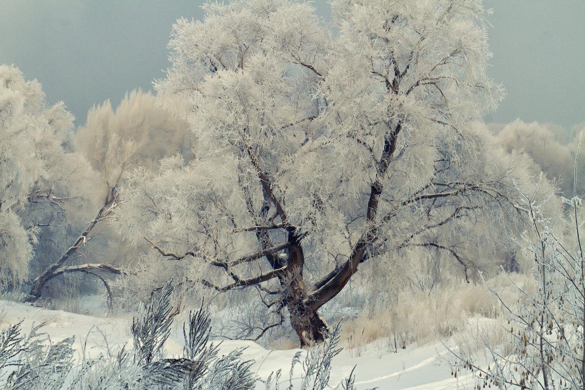 Морозное утро - Megalara Garuda