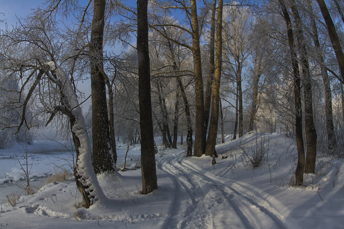 Зимний лес - Megalara Garuda