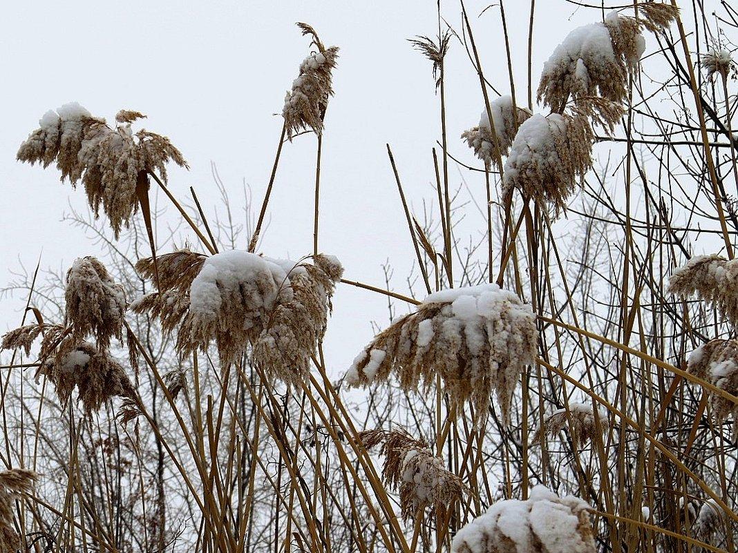 Мокрый снег - Natali