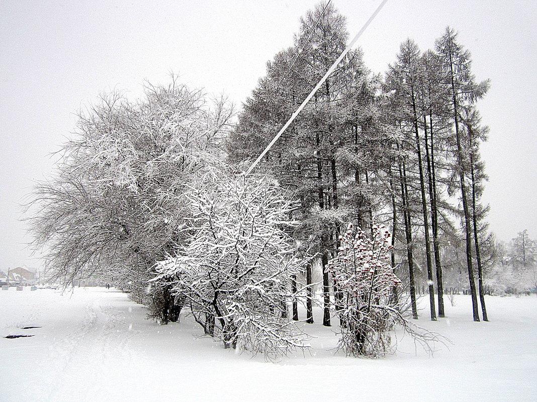 Зима одела  снежный саван. - Мила Бовкун