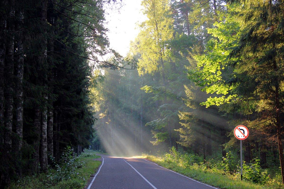 дорога к солнцу - Нина