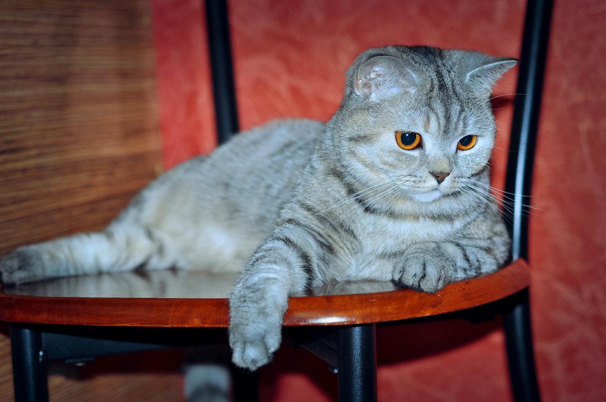 кошка - Валерия Бунак