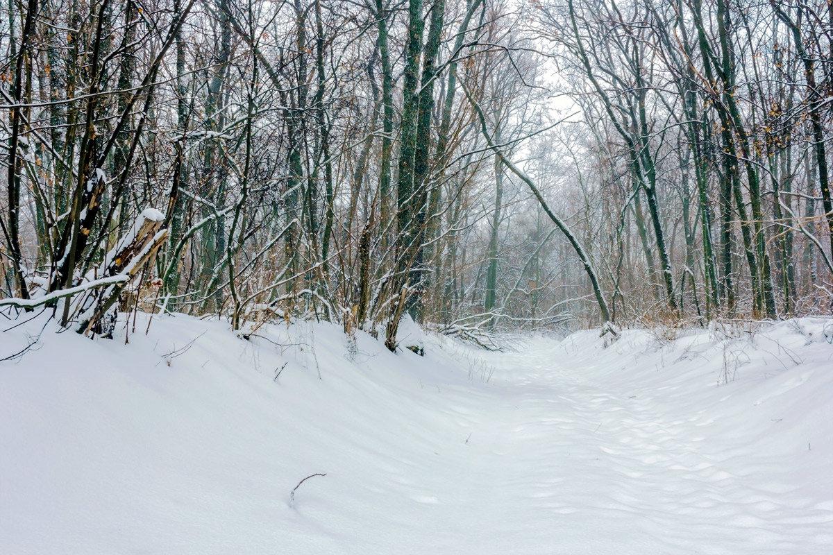 Спокойно в лесу... - Юрий Стародубцев