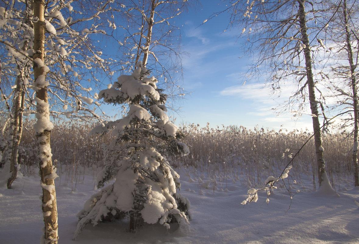 вот такие зимние наряды... - liudmila drake