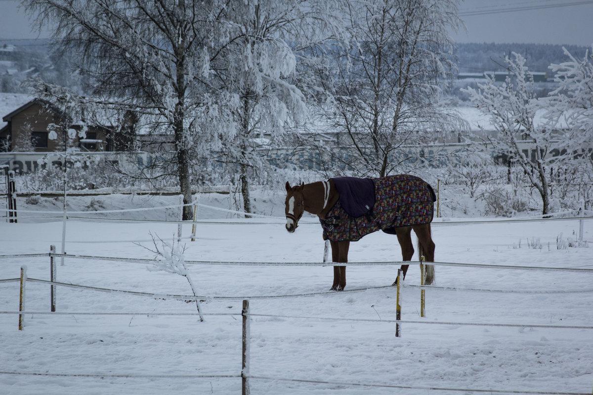 Зимний вечер - Aнна Зарубина