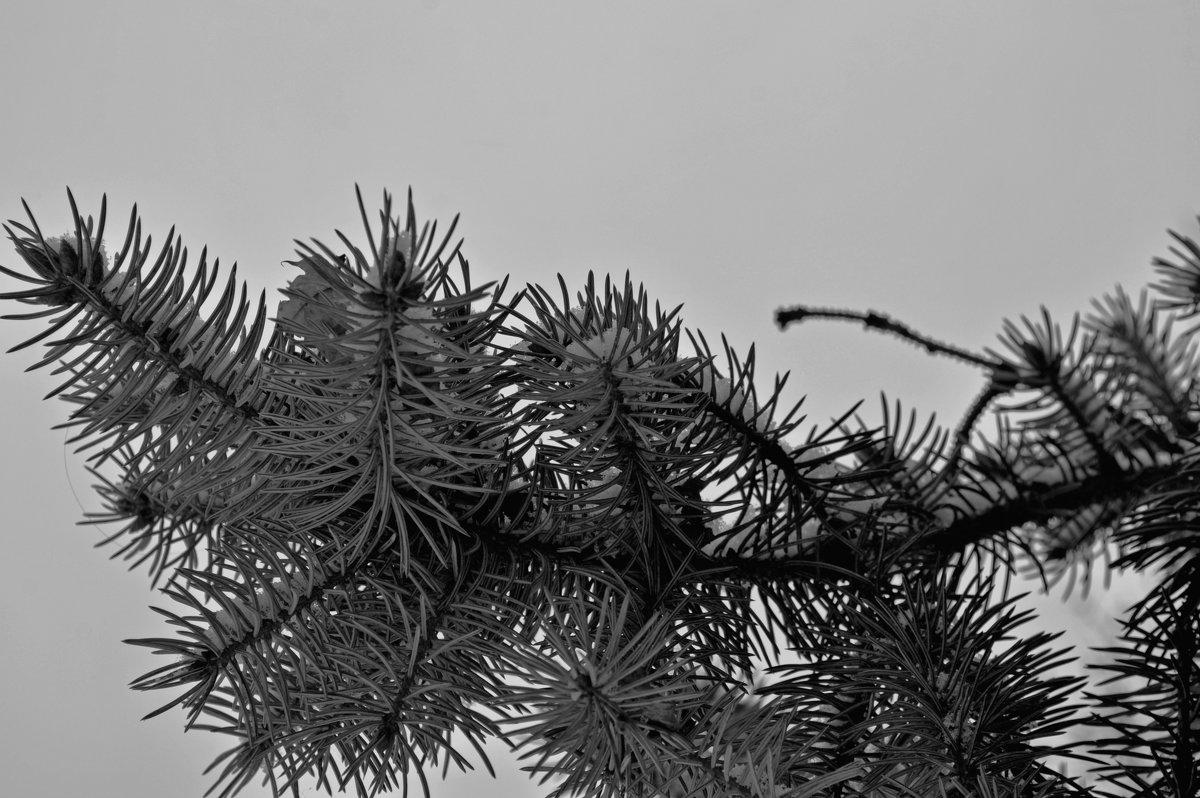 Зимовий настрій - Наталия Рой