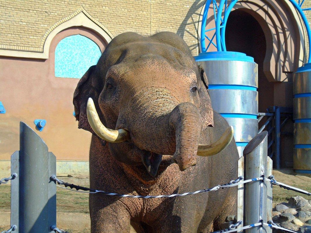 Слон - Наталья (Nata-Cygan) Цыганова