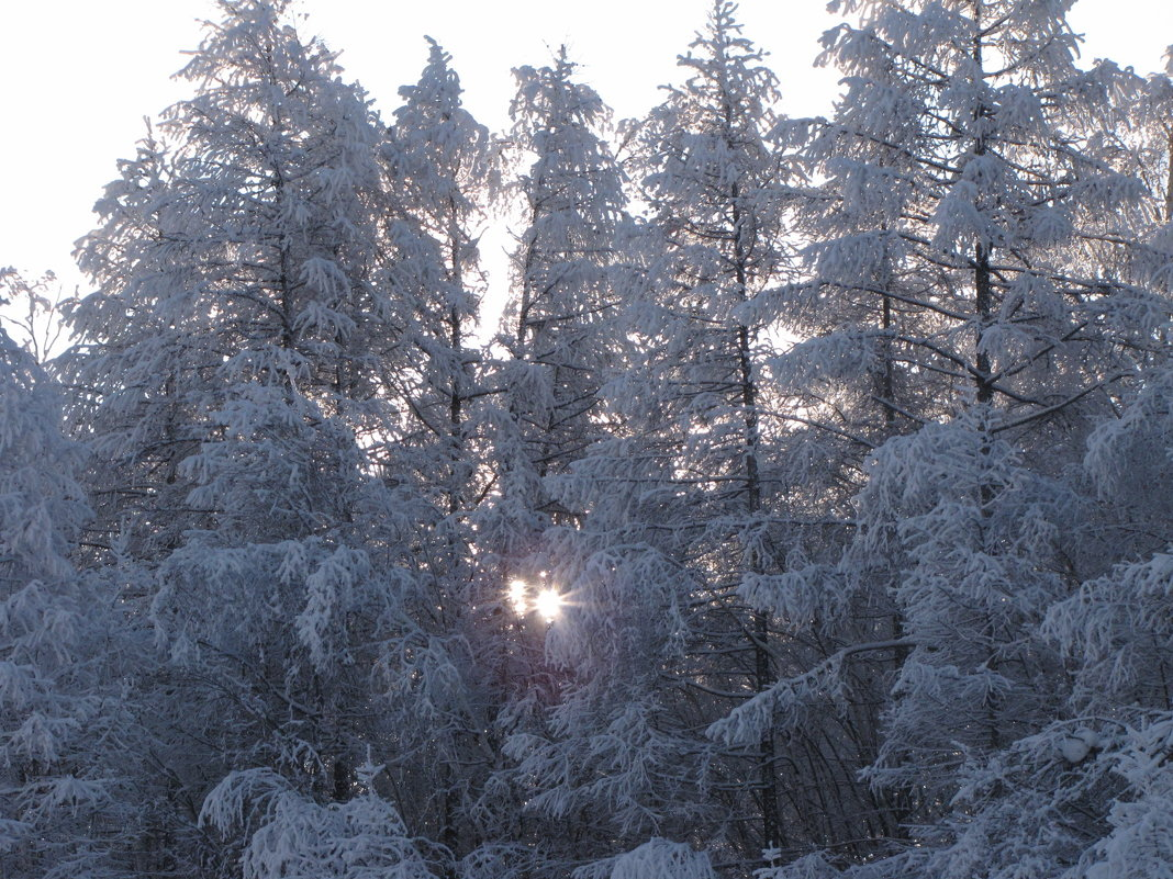 Немного солнца средь деревьев - Ольга Иргит