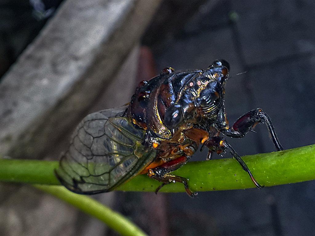 редко снимаю макро,но тут не удержался и снял на тел,угадаете насекомое?) - Александр