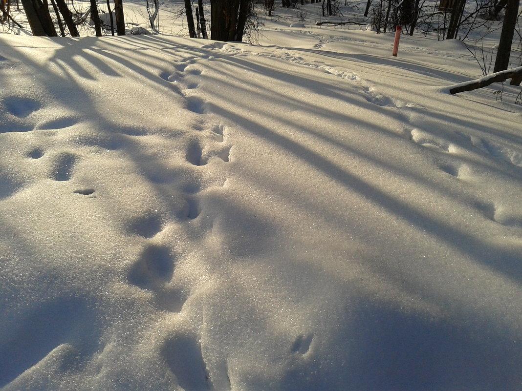 Зима - Мила