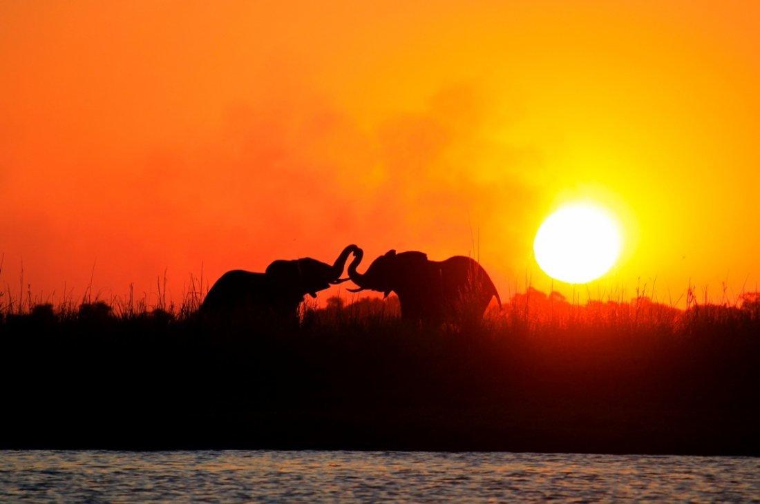 DELTA OKAWANGO (БОТСВАНА) - Volmar Safaris