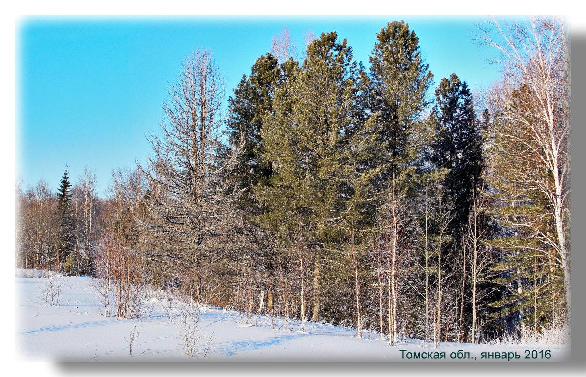 Природа Сибири - Людмила Н