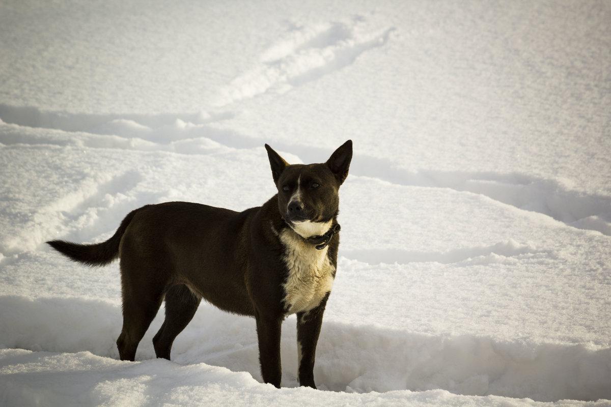 На снегу - Aнна Зарубина
