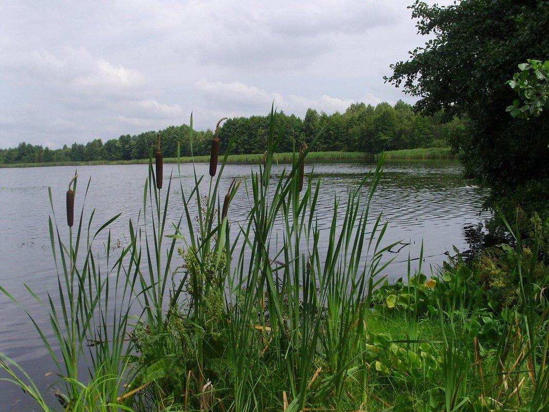 Озеро Тельминское - Виктор Мухин