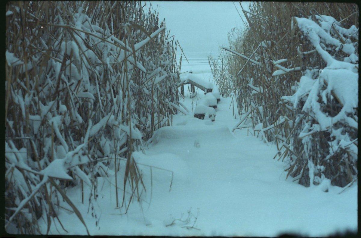 Зима - Сурикат Сусликов