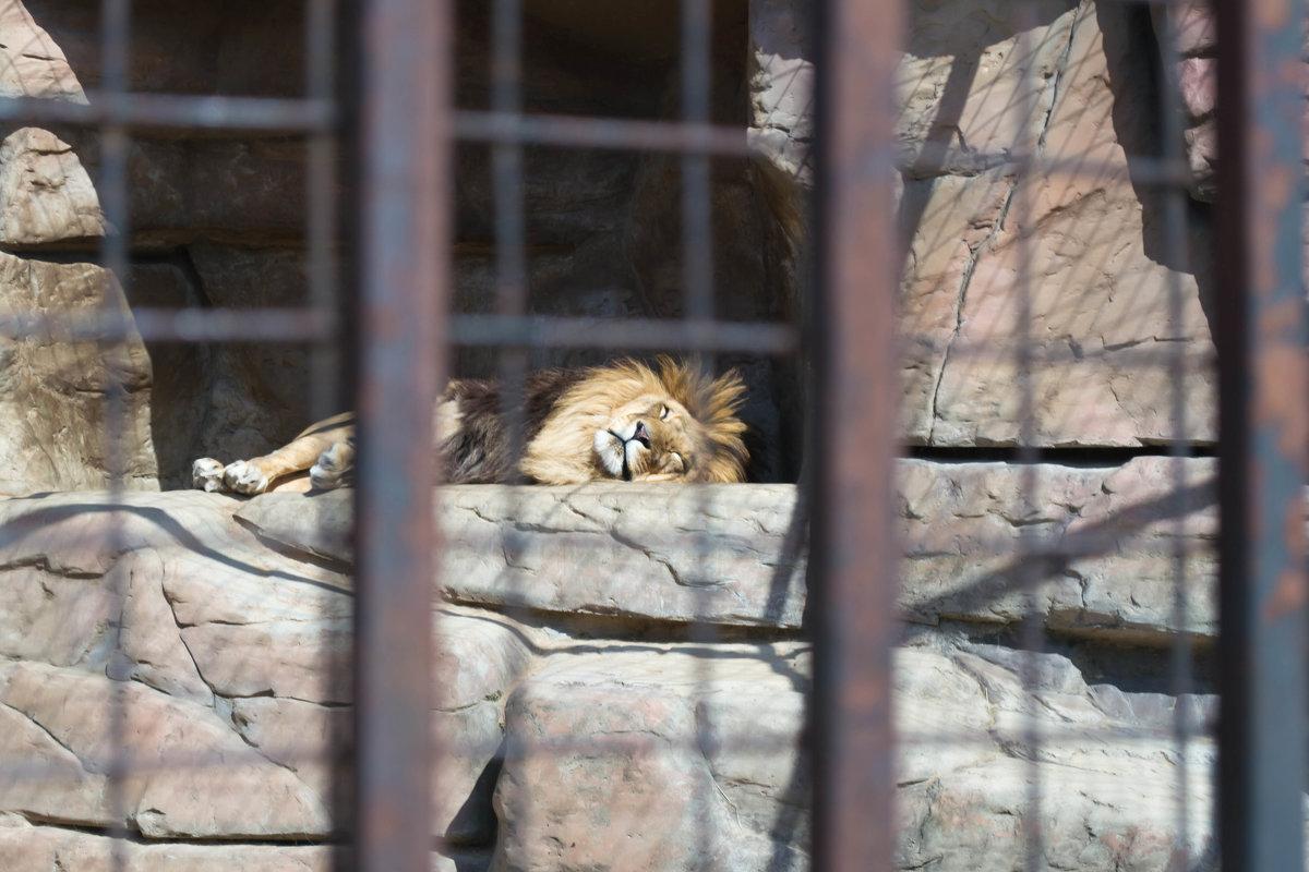 Минский зоопарк - Ksy КорСор