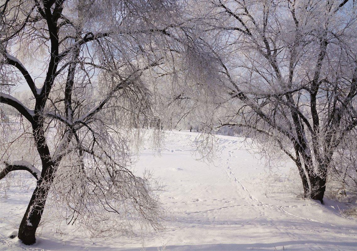 Среди деревьев - Наталия Григорьева