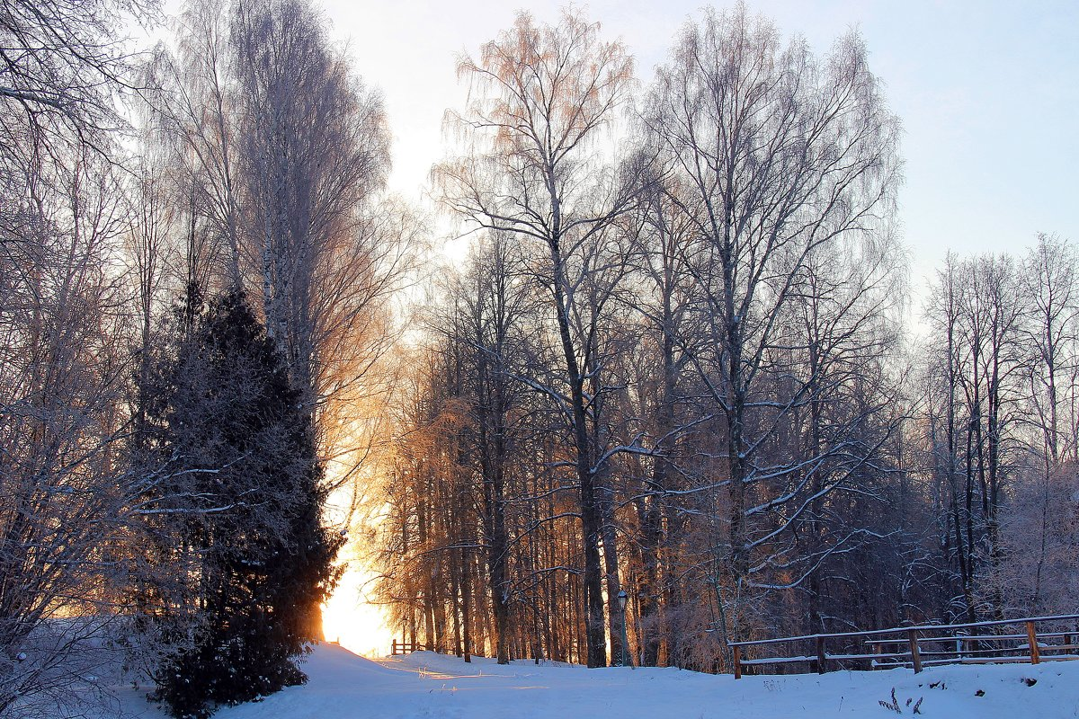 солнце встаёт - Нина