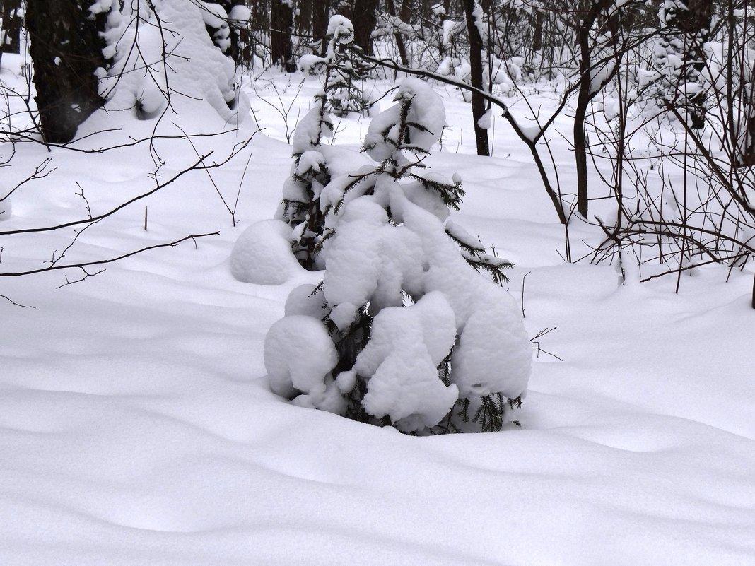 снежно в лесу - Валентина. .