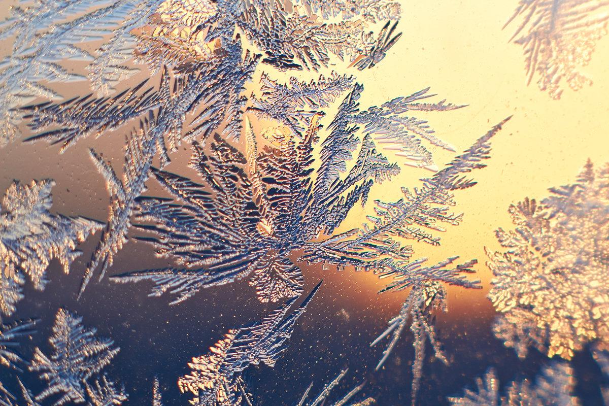 морозный цветок - Седа Ковтун
