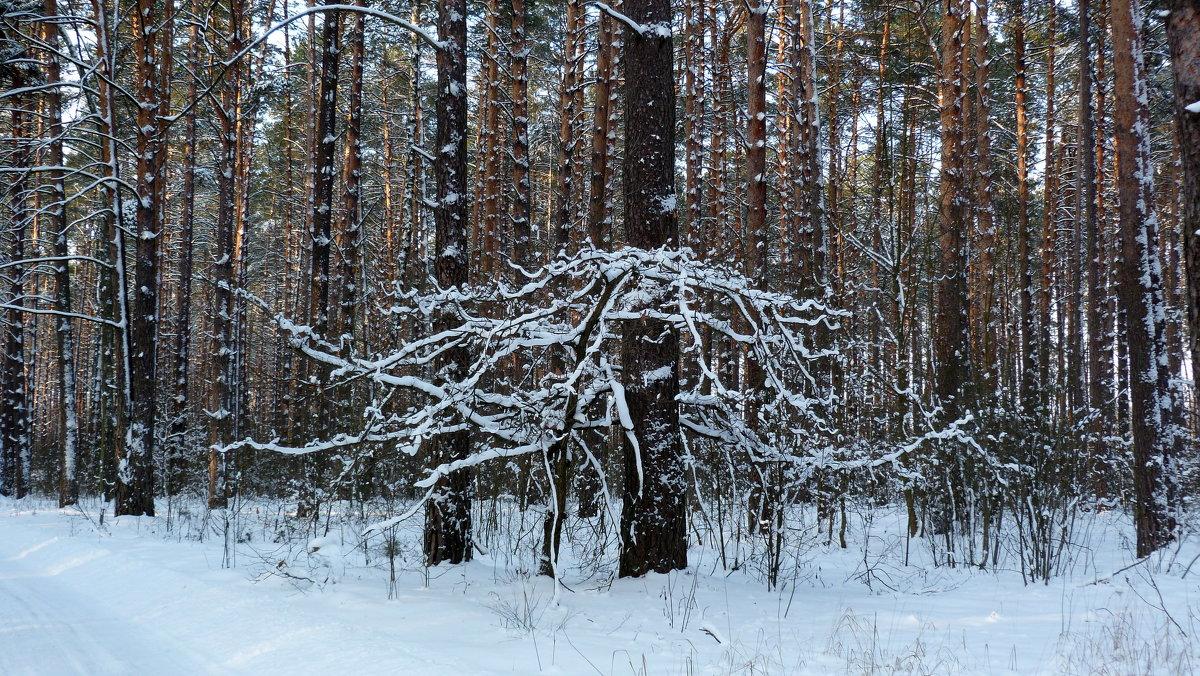 белый страж леса - Александр Прокудин