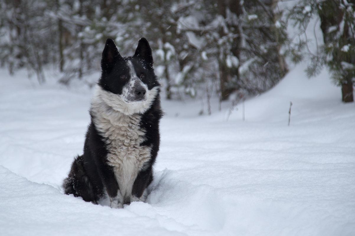Верный пес - Светлана