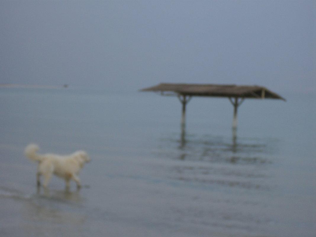Собака на Мёртвом море - Надежда