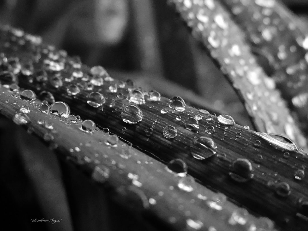 после дождя - Svetlana Baglai