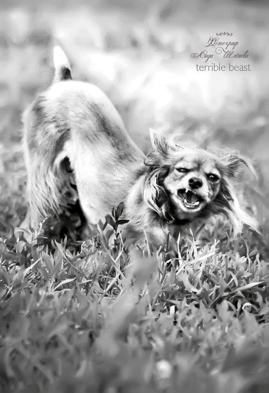 страшный зверь:) - лада шлёнова