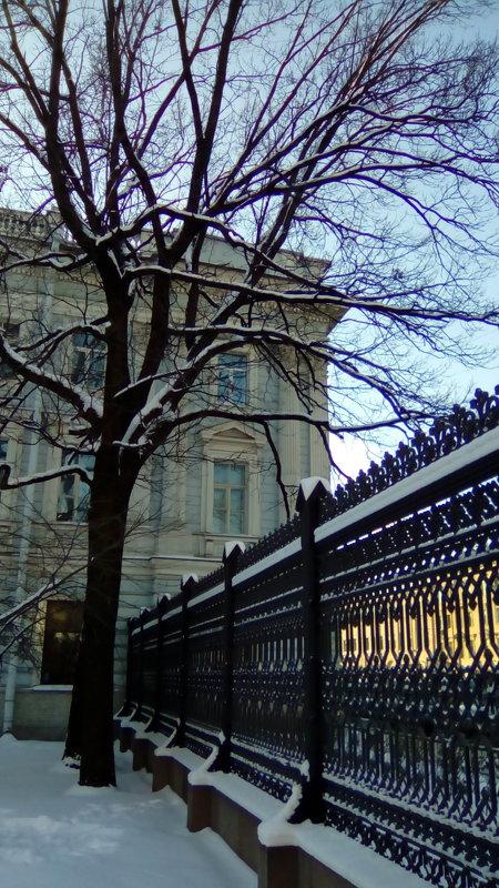 Сад Сан Галли зимой в Петербурге. - Светлана Калмыкова